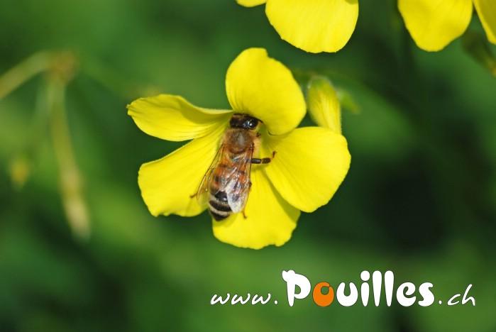 Fleurs Beepouilles_110