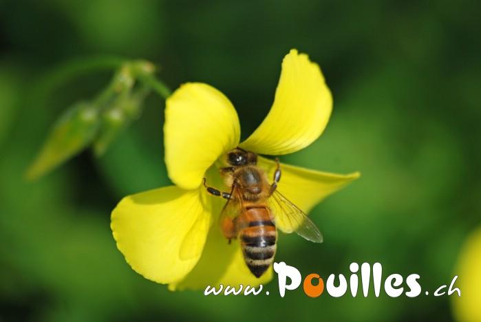 Fleurs Beepouilles_111