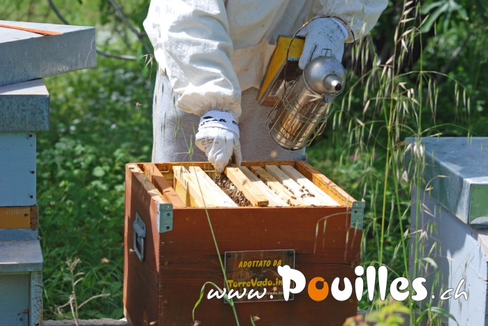 apiculture-Salento-photo-pouilles_124