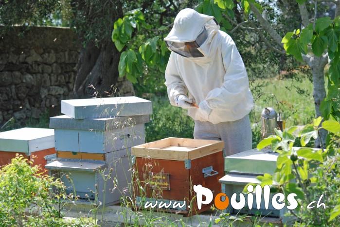 apiculture-Salento-pouilles_123