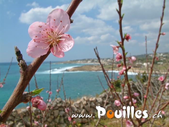 fleur-dans-la-mer-photo-pouilles_011