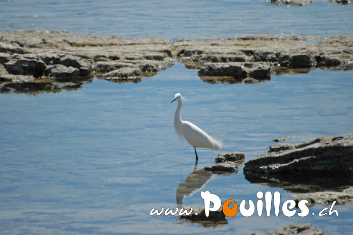 photo-pouilles_043