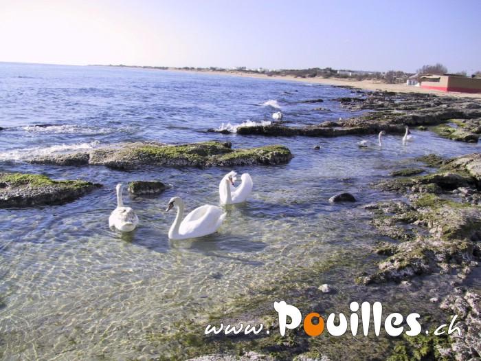 photo-pouilles_048