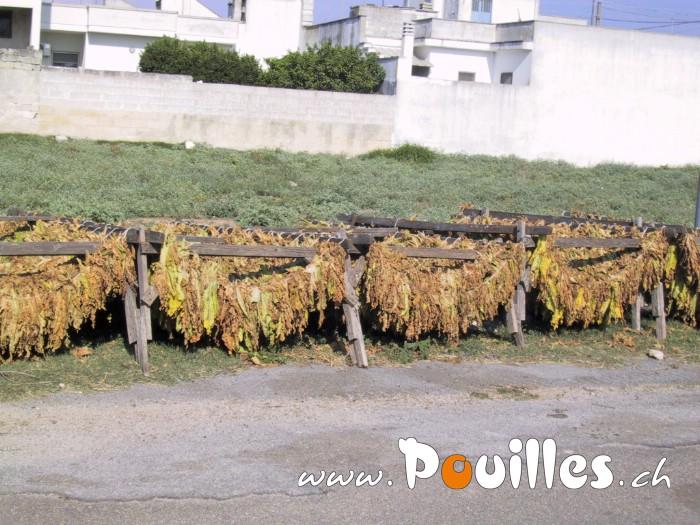 photo-pouilles_051