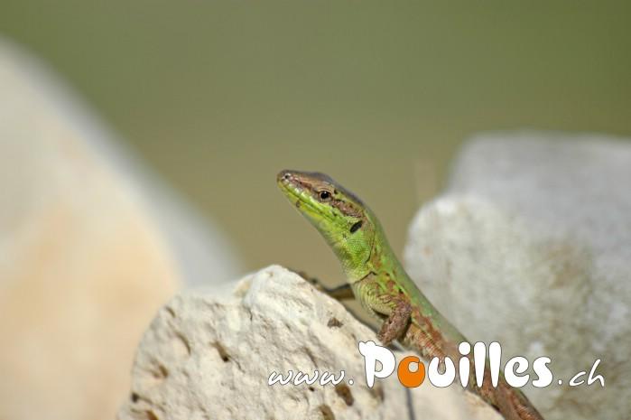 photo-pouilles_067