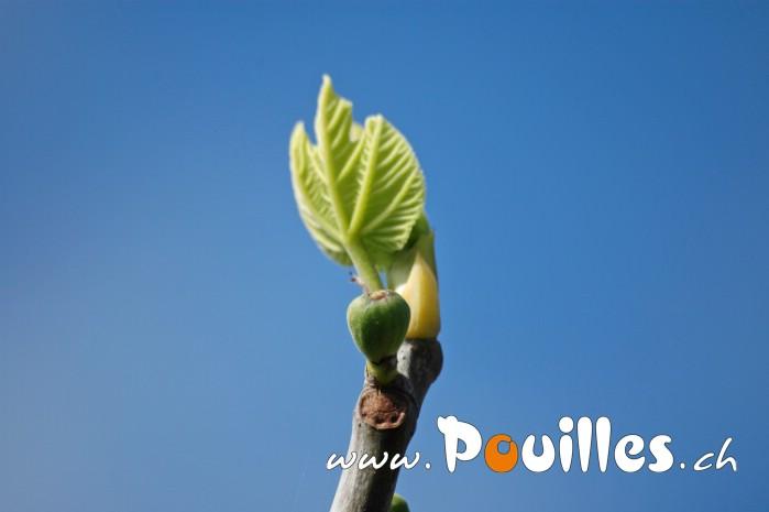 photo-pouilles_098