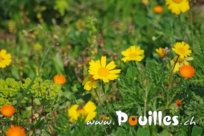 photo-pouilles_109