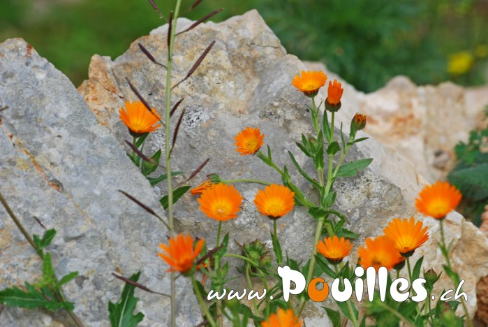 photo-pouilles_112