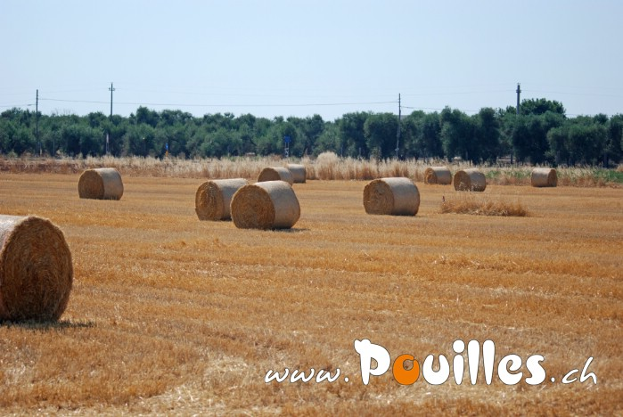 photo-pouilles_139