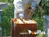 apiculture-Salento-photo-pouilles_124