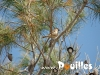 photo-pouilles_105